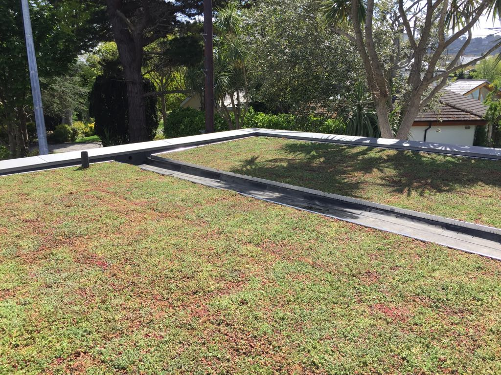 Sedum Green Roof on Moy Materials Paralon System